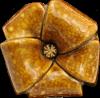 Mahoe Flower